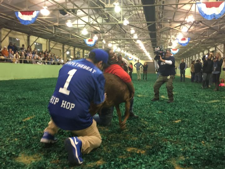 Victory @ Goat Milking Contest!!!
