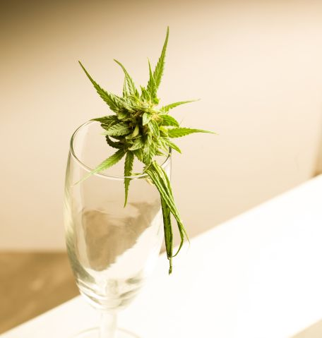 Canabis sativa Leaf, flower