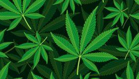 Seamless Background Cannabis Leaf